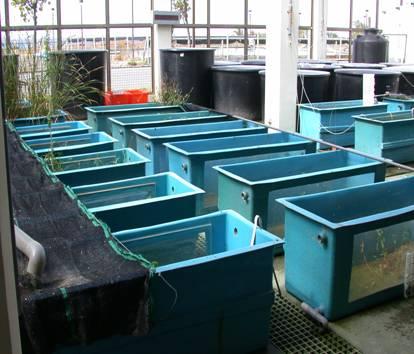 28.600L FRP方形養殖缸